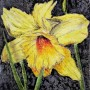 'Ode to a Daffodil', by Mary Wallace